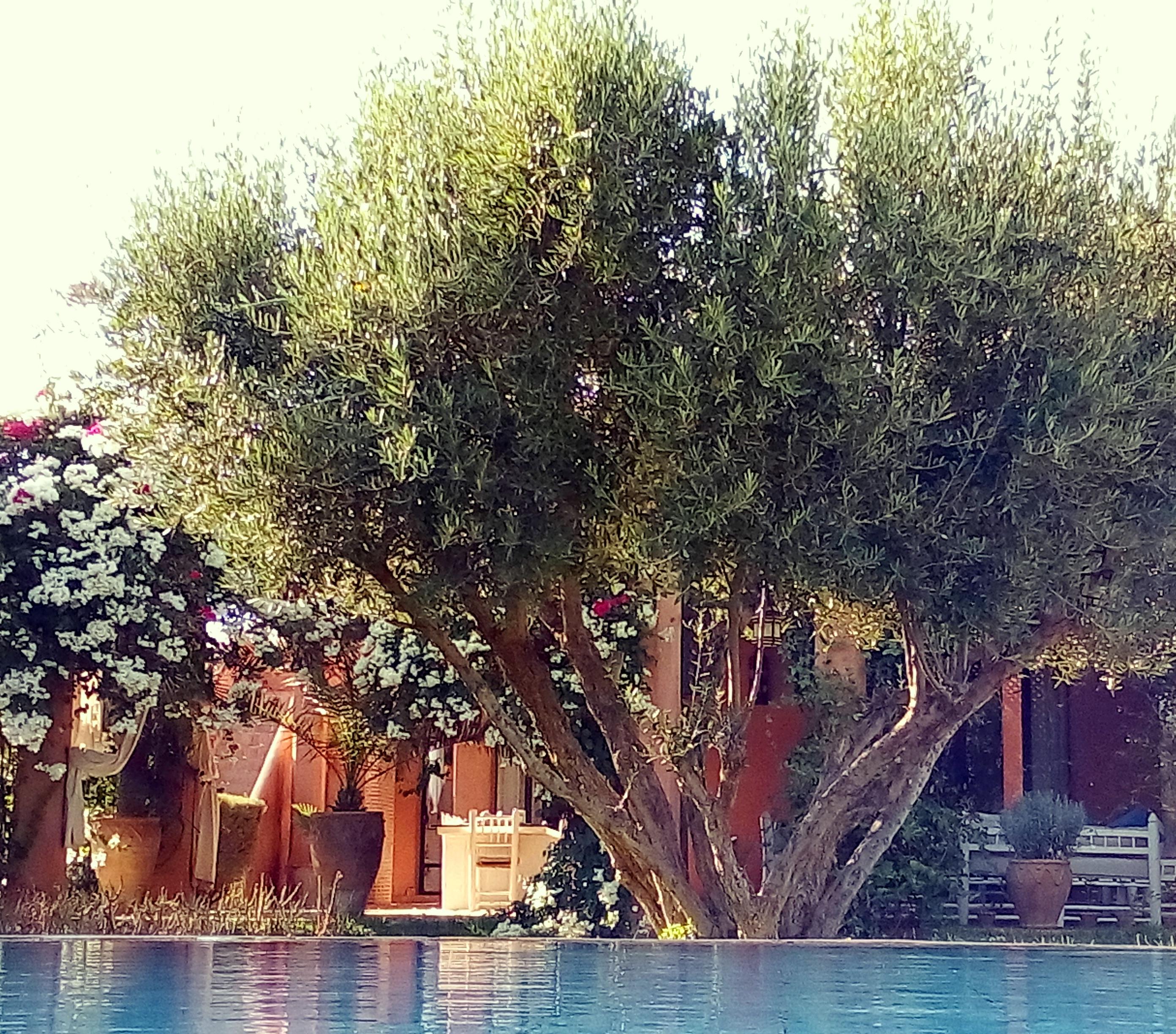 Douar Lain - Chambres d'Hôtes - Bed & Breakfast - Marrakech