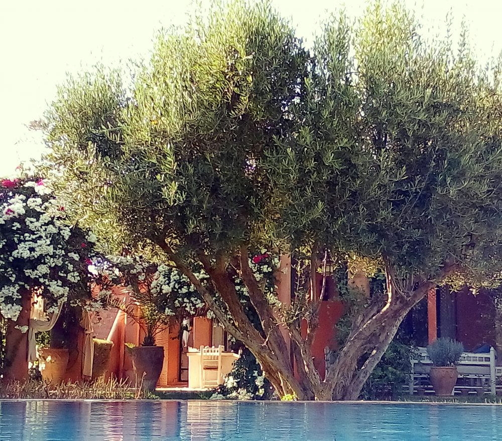 Douar Lain - Chambres d'Hôtes - Bed & Breakfast - Marrakech